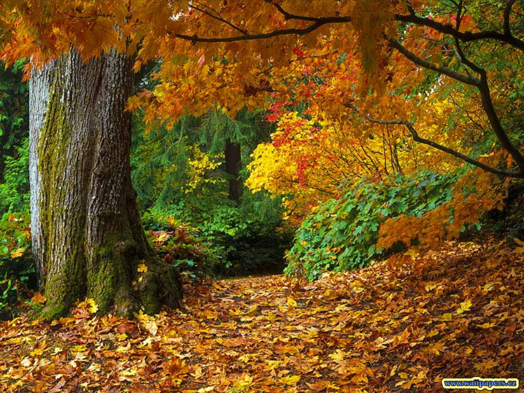 fall of autumn leaves wallpaper One From The Vaults 1024x768