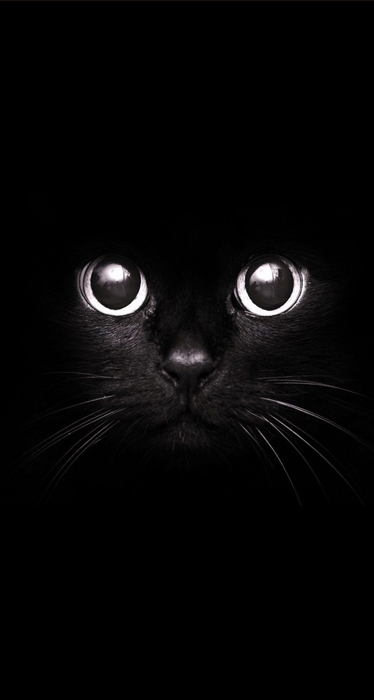 Black Cat Dark Iphone Wallpaper 2021 Live Wallpaper HD 740x1384