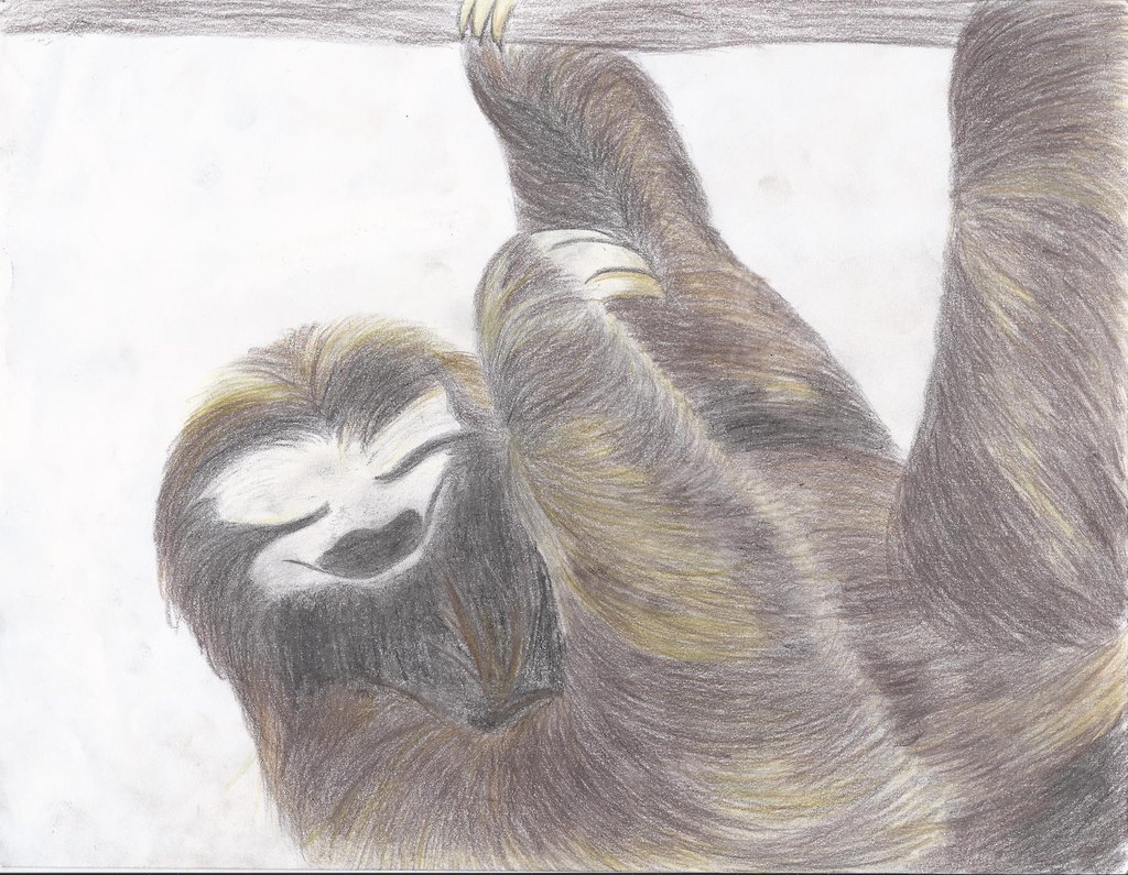 pygmy three toed sloth analysis Facts summary: the pygmy three-toed sloth (bradypus pygmaeus) is a species  of concern belonging in the species group mammals and found in the.