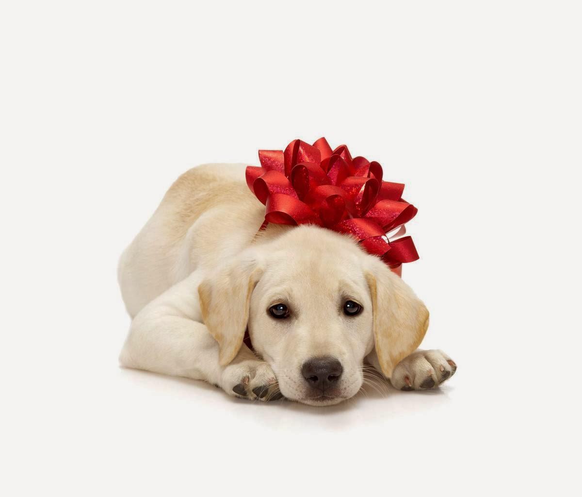 Christmas gift for dog lovers wallpaper   beautiful desktop wallpapers 1200x1024