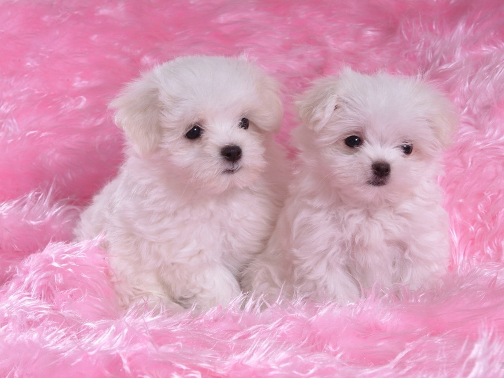 cute dogs and puppies wallpaper 1024x768