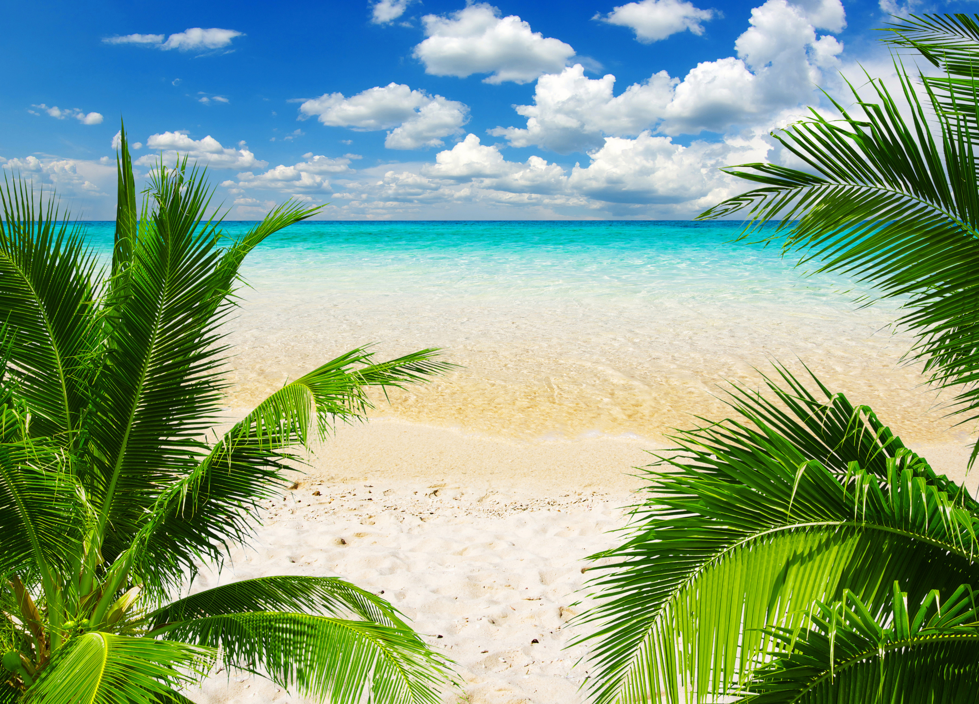Tropic Beach Background Gallery Yopriceville   High Quality 4000x2880