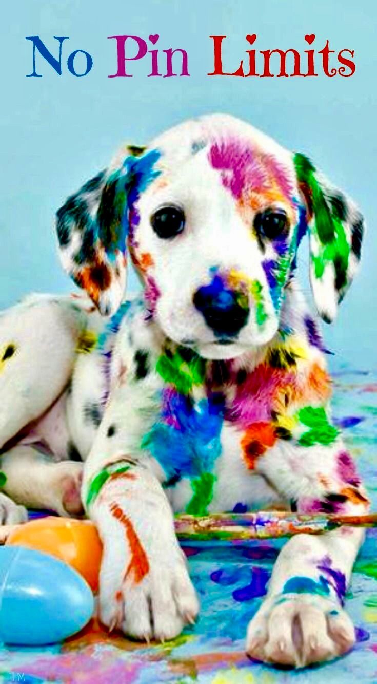 No Pin Limits COLOR my WORLD Animals Cute animals Cute dogs 735x1332