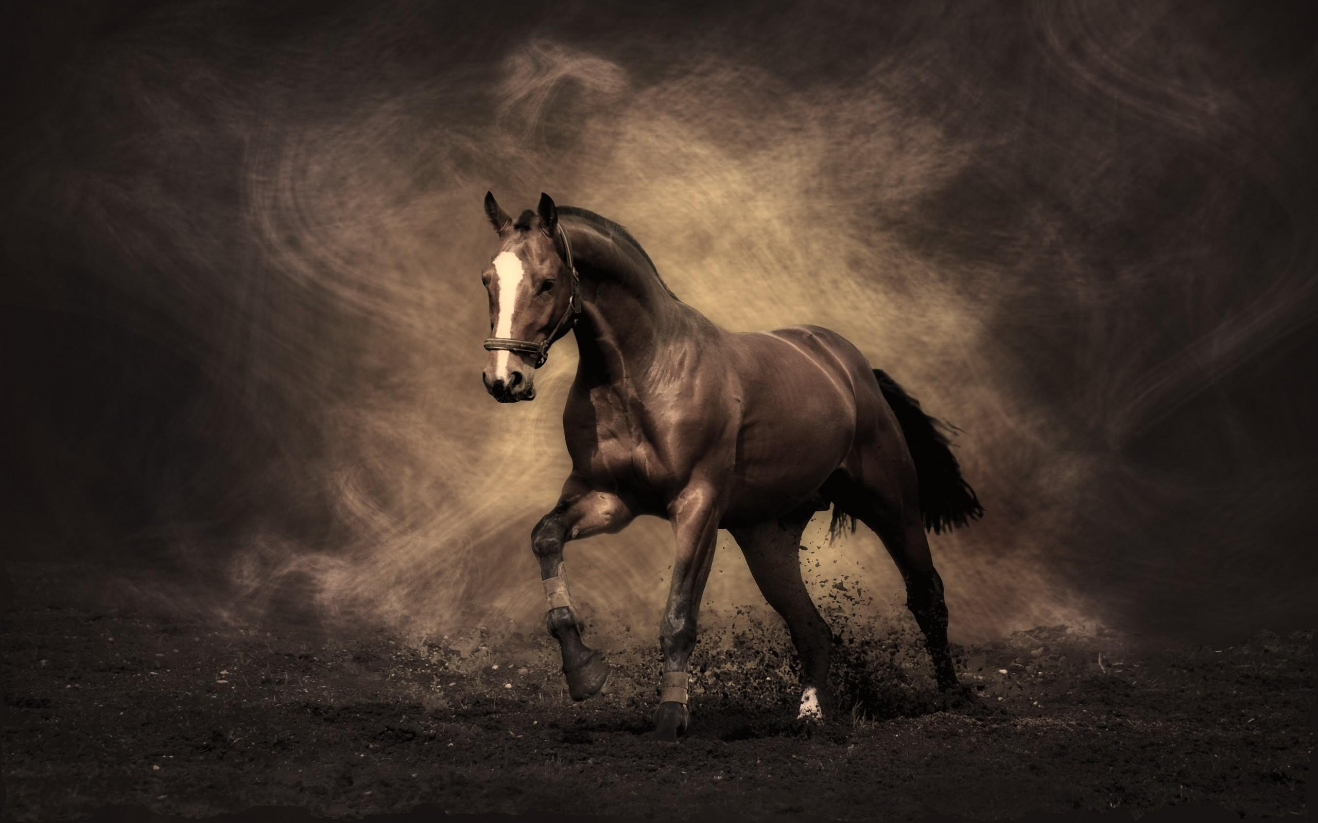 Equestrian horse running wallpaper HD Wallpaper 2560x1600