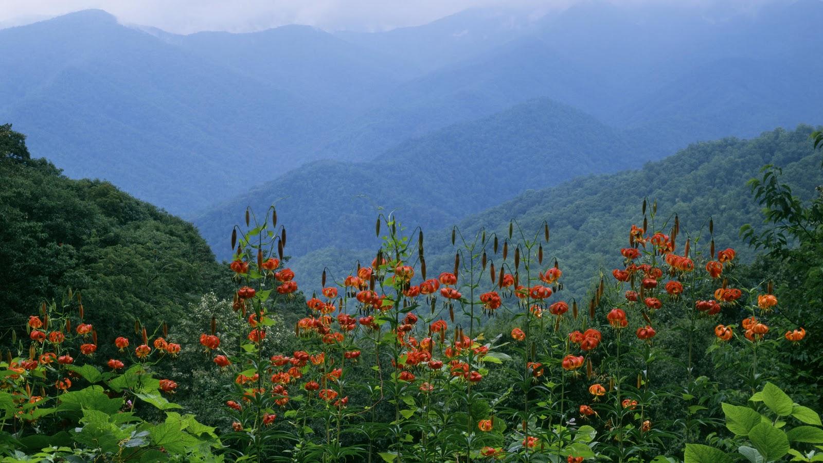 45] Smoky Mountains Spring Wallpaper on WallpaperSafari 1600x900