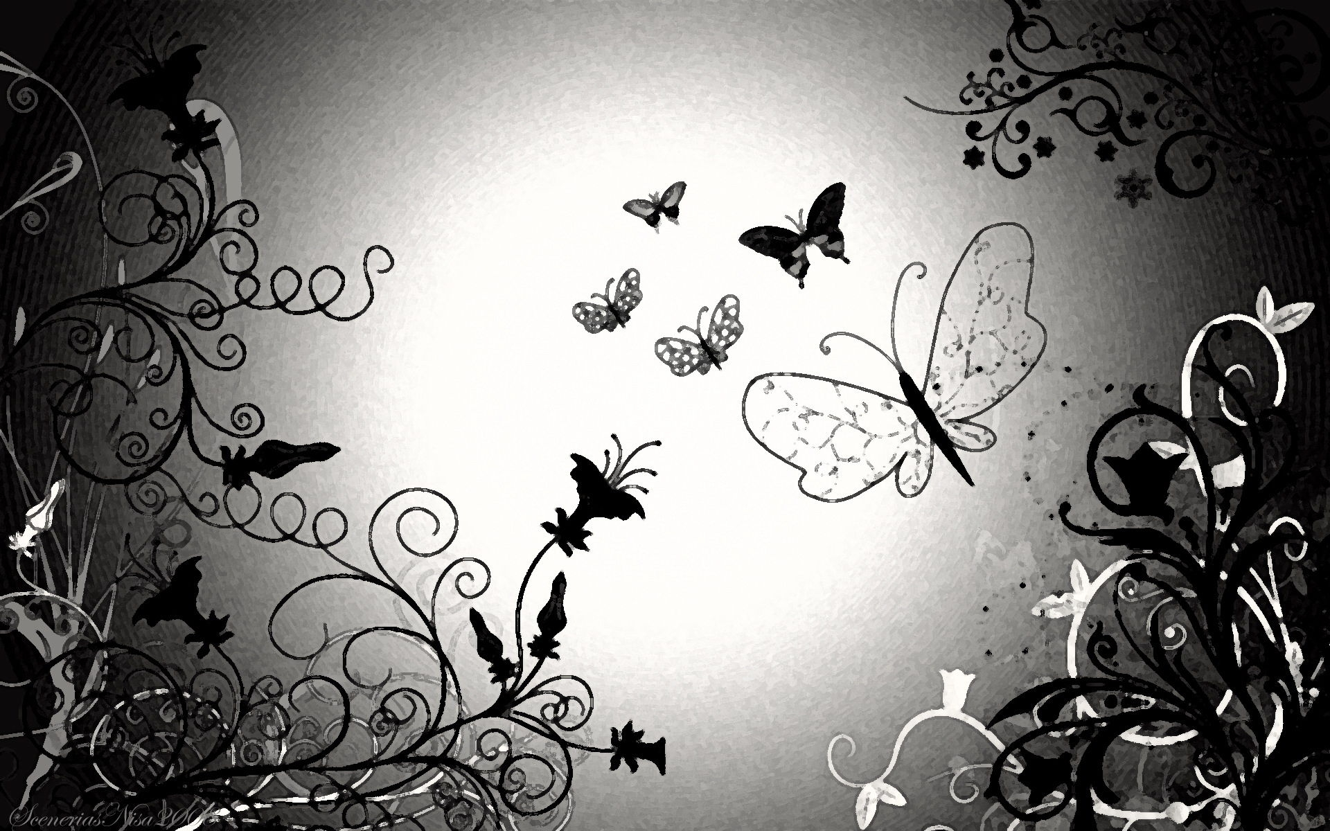 Black And White Butterfly Wallpaper HD 1920x1200