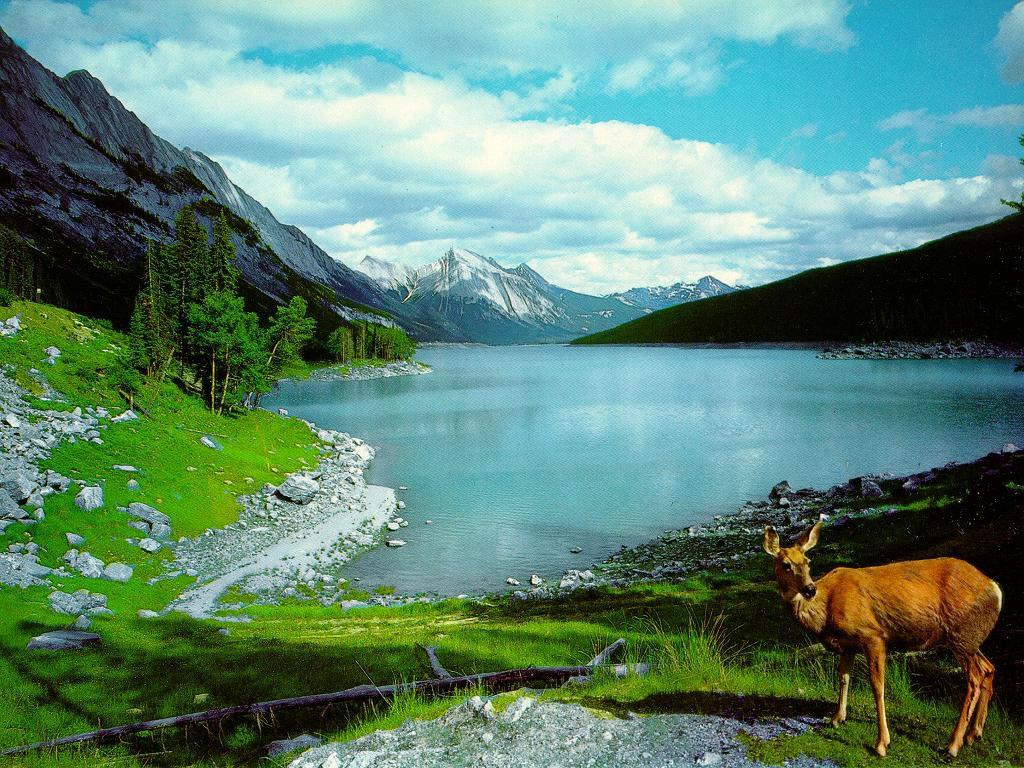 wallpapers Beauty Of Nature Desktop Wallpapers 1024x768