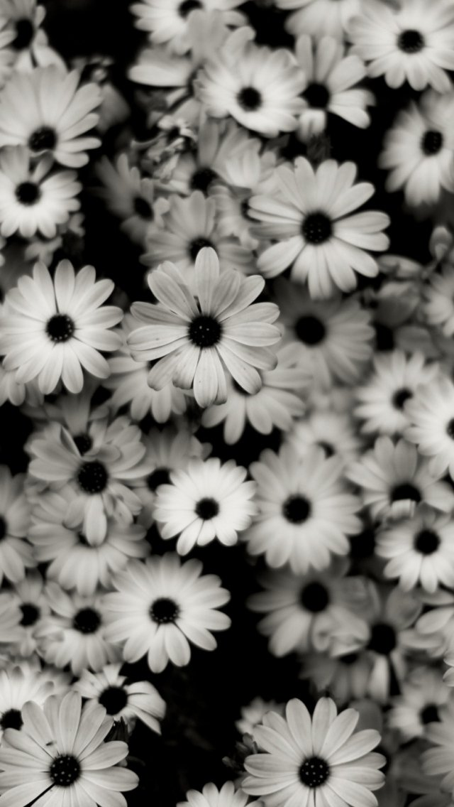 40+ Gray and White Flower Wallpaper on WallpaperSafari