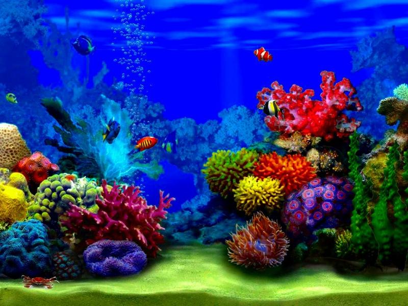 beautiful fish wallpapers for desktop wallpapersafari