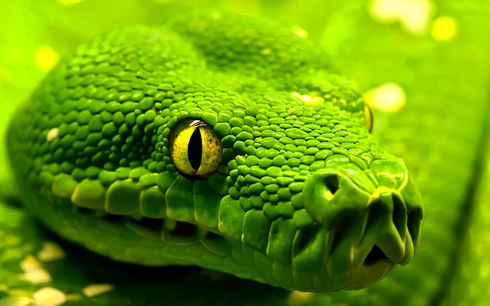 Αποτέλεσμα εικόνας για green snake