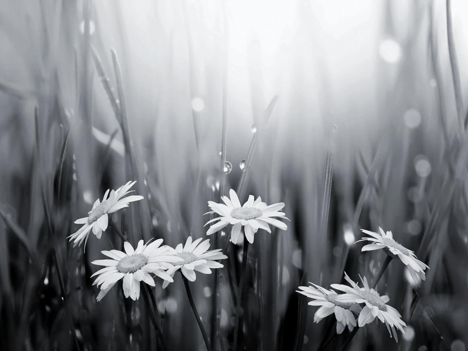 Black and White Flowers Wallpaper WallpaperSafari