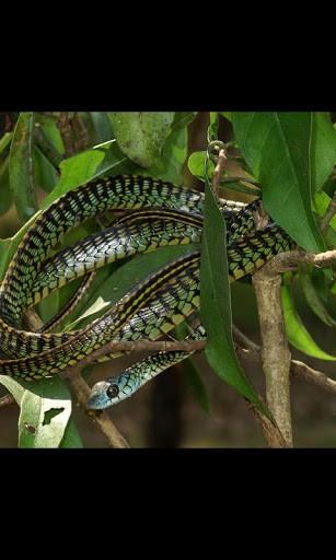 50+ Live Snake Wallpaper on WallpaperSafari