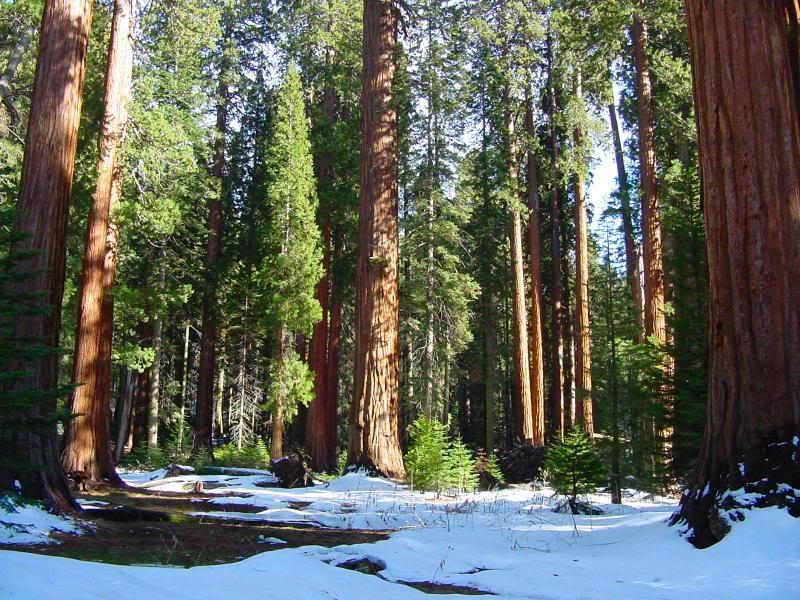 SEQUOIA NATIONAL PARK WALLPAPER   52129   HD Wallpapers 800x600