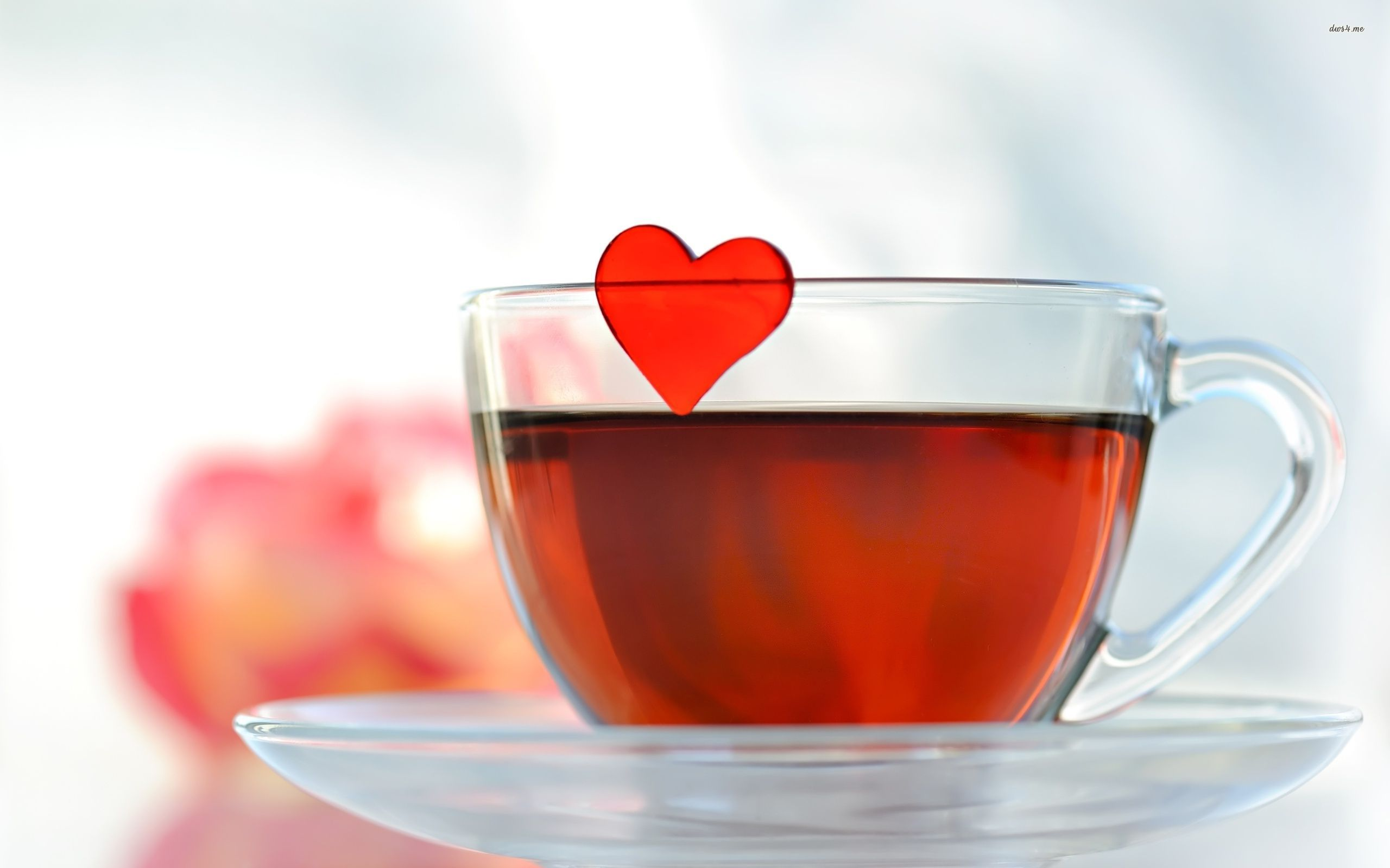 Cup Of Lovely Tea wallpapers HD   399561 2560x1600