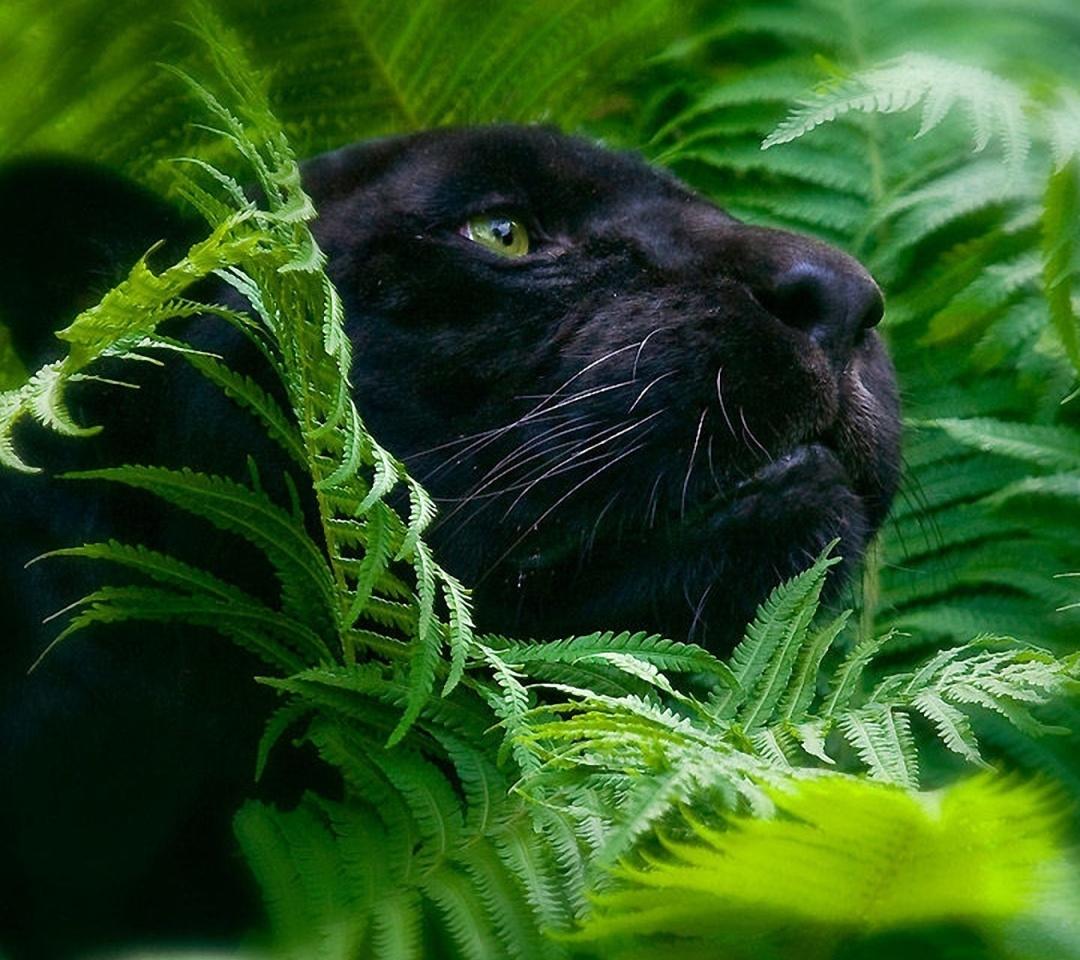 free 1080X960 black panther 1080x960 wallpaper screensaver preview id 1080x960