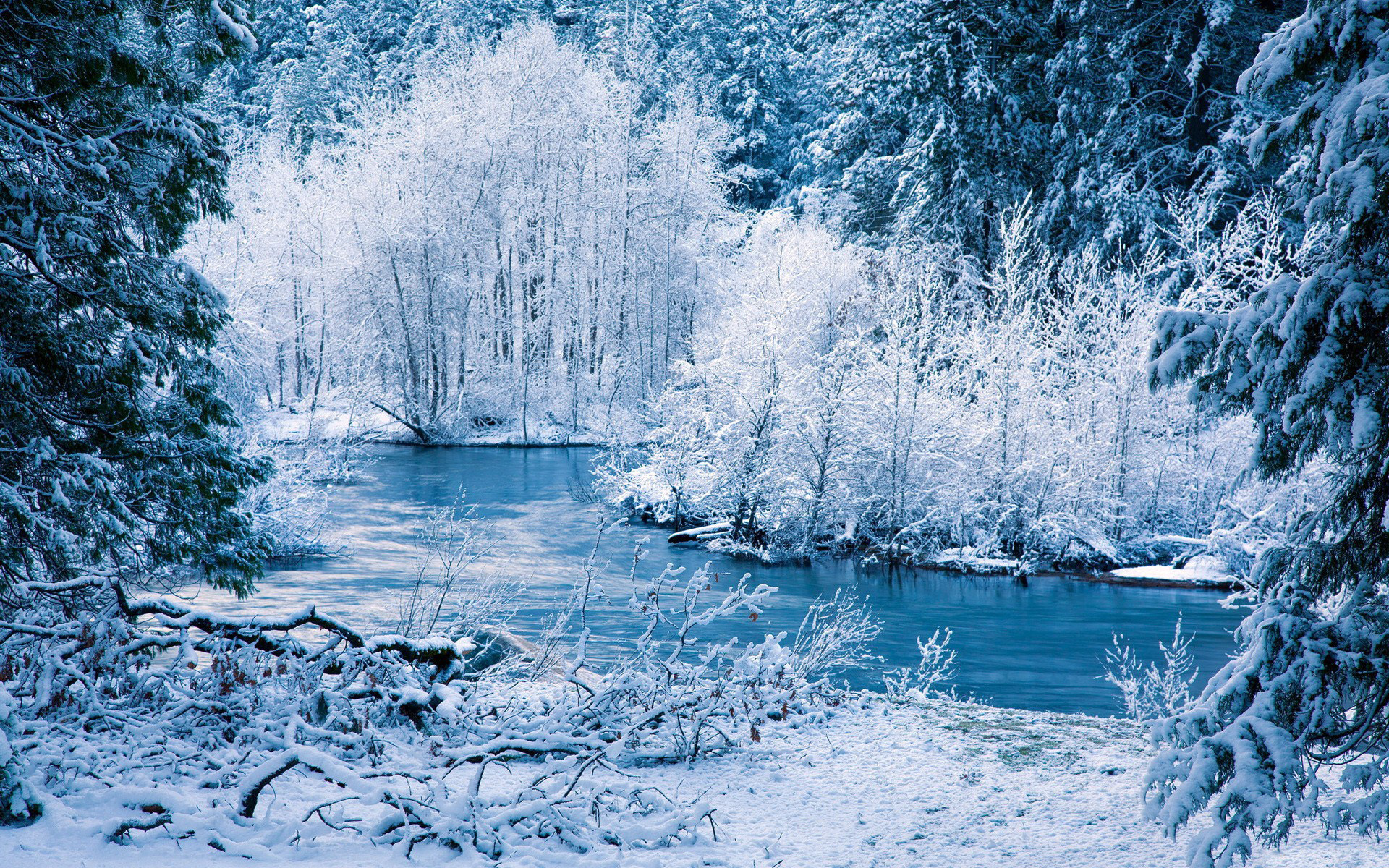 snow frost rivers shore trees forest seasonal wallpaper background 1920x1200