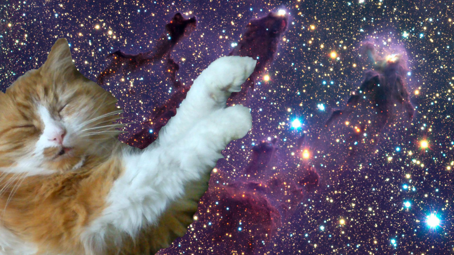 Galleries Related Tumblr Cat Trippy Background 1920x1080