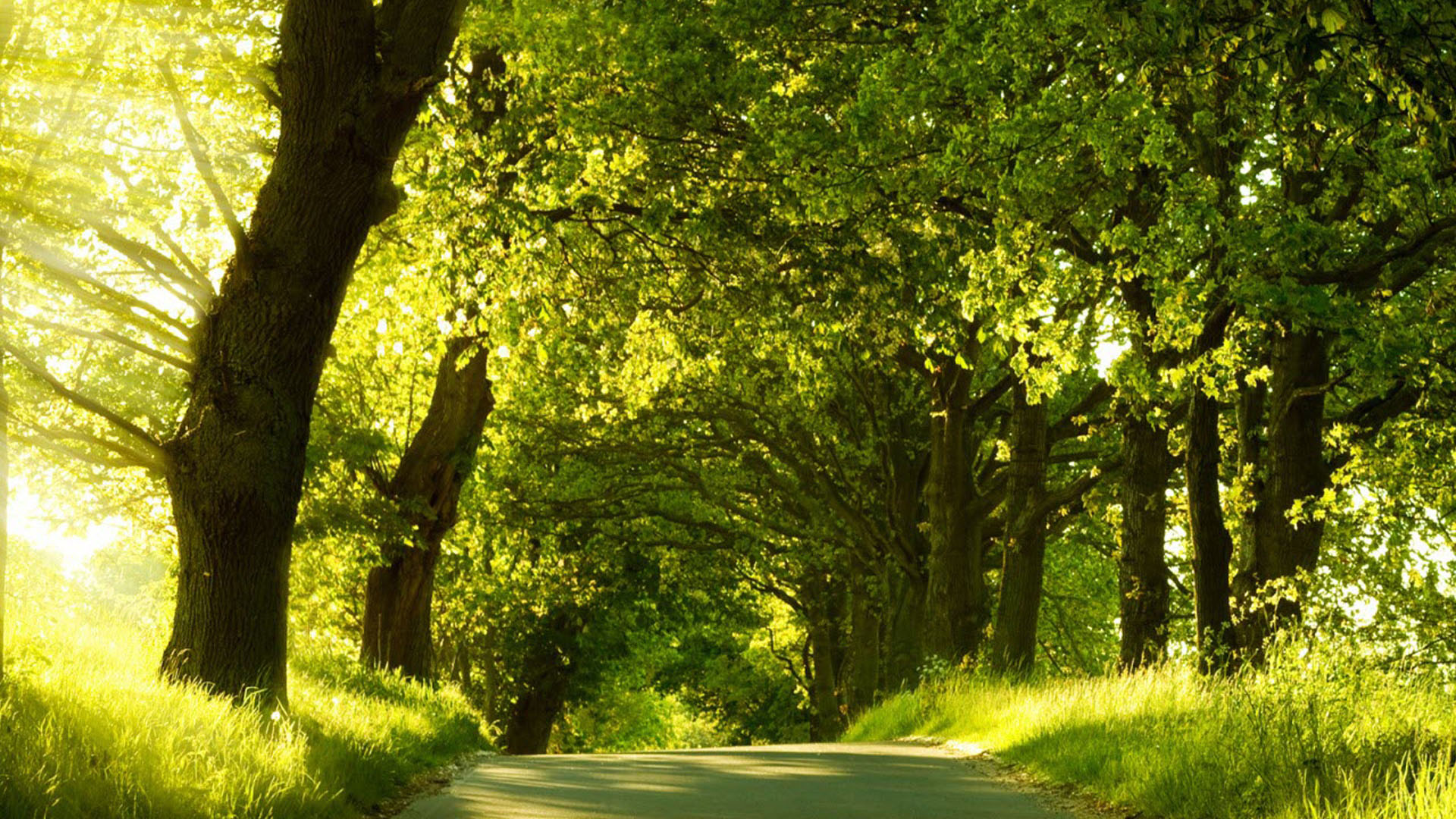 Green Nature Wallpapers HD Pictures | One HD Wallpaper ...
