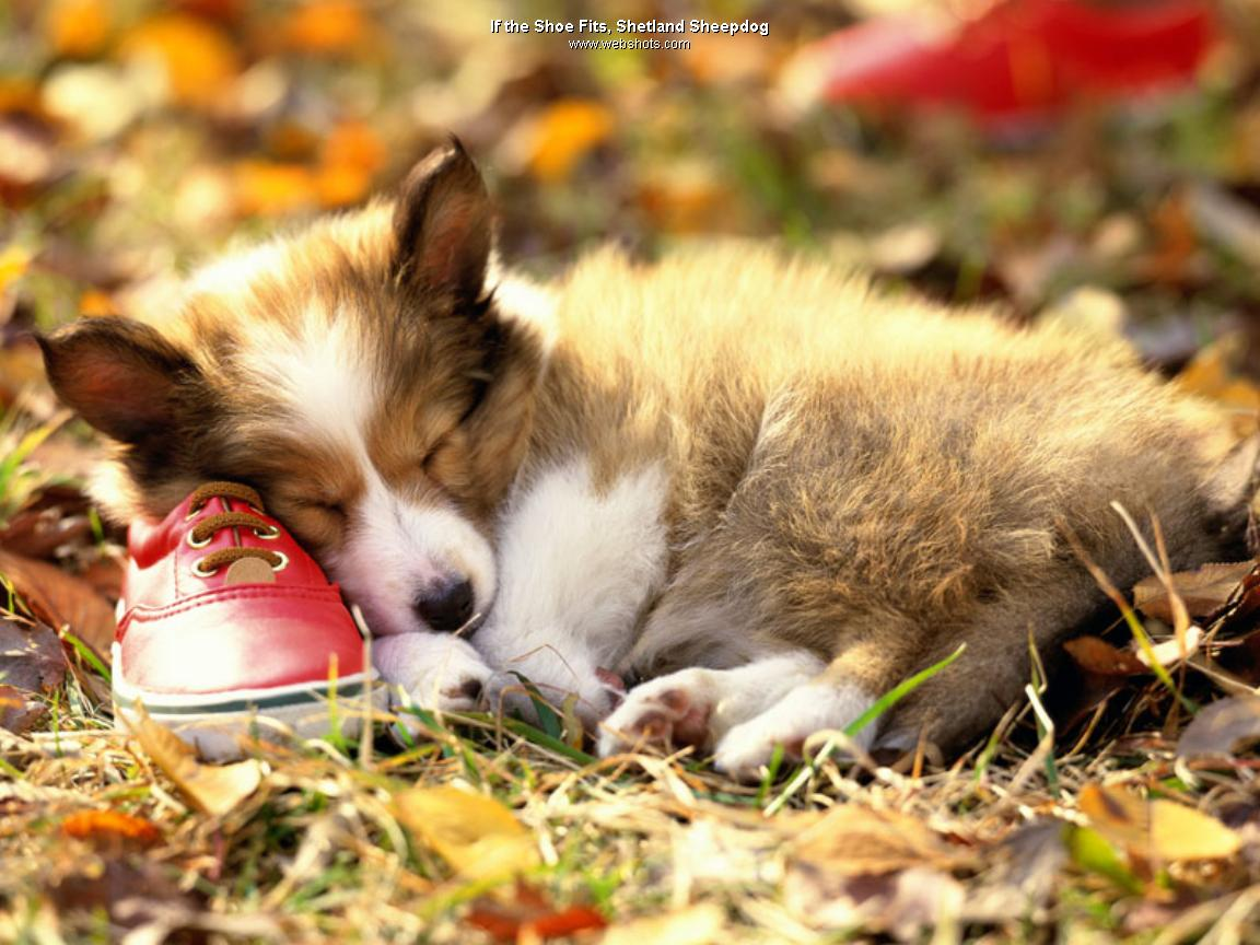 dog wallpaper dog wallpapers dogs for wallpaper dogs wallpaper dogs 1152x864