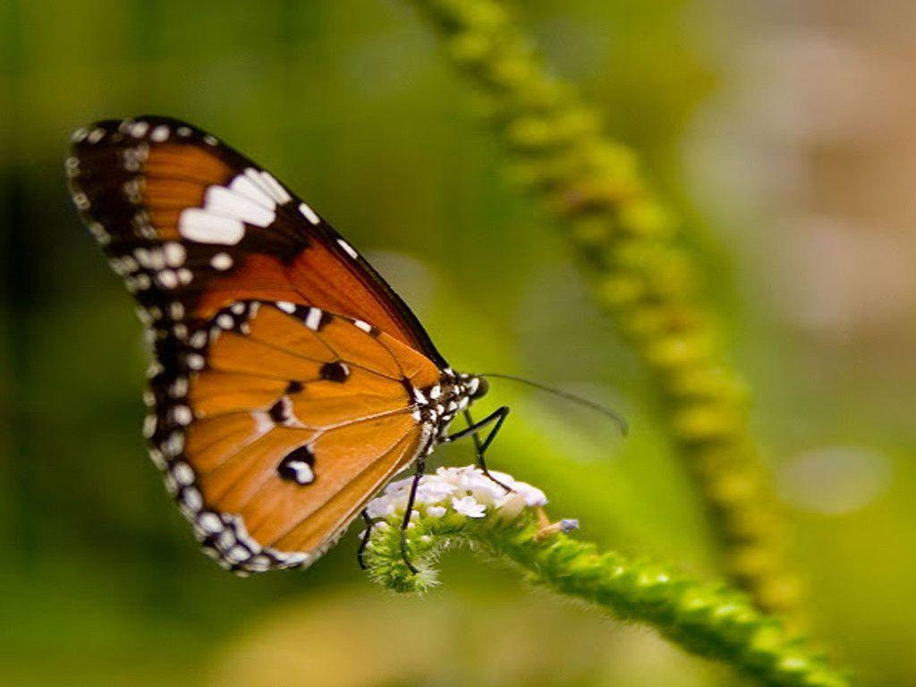 3D Butterfly Wallpapers 1024x768