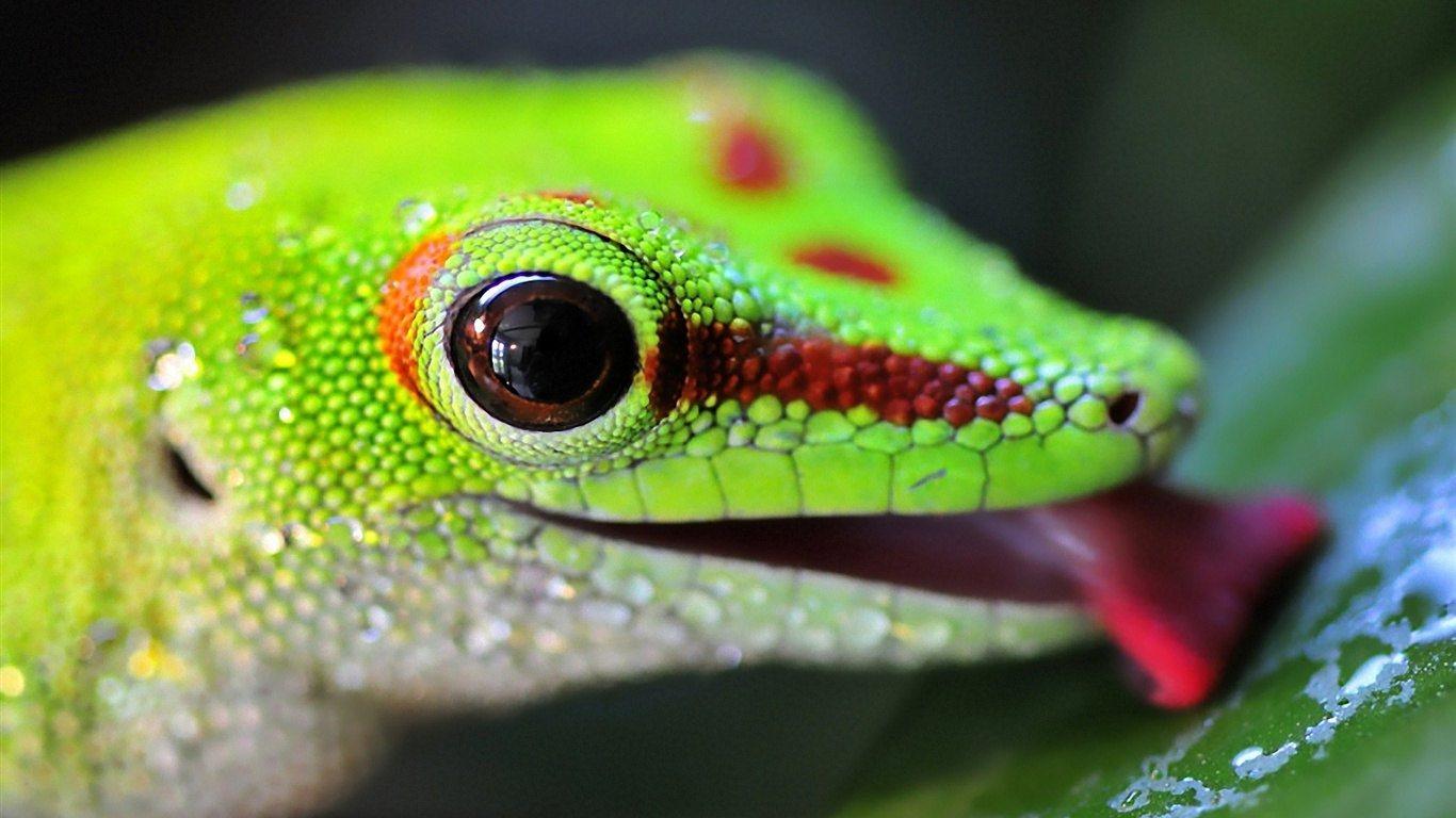 43 Lizard Wallpapers On Wallpapersafari