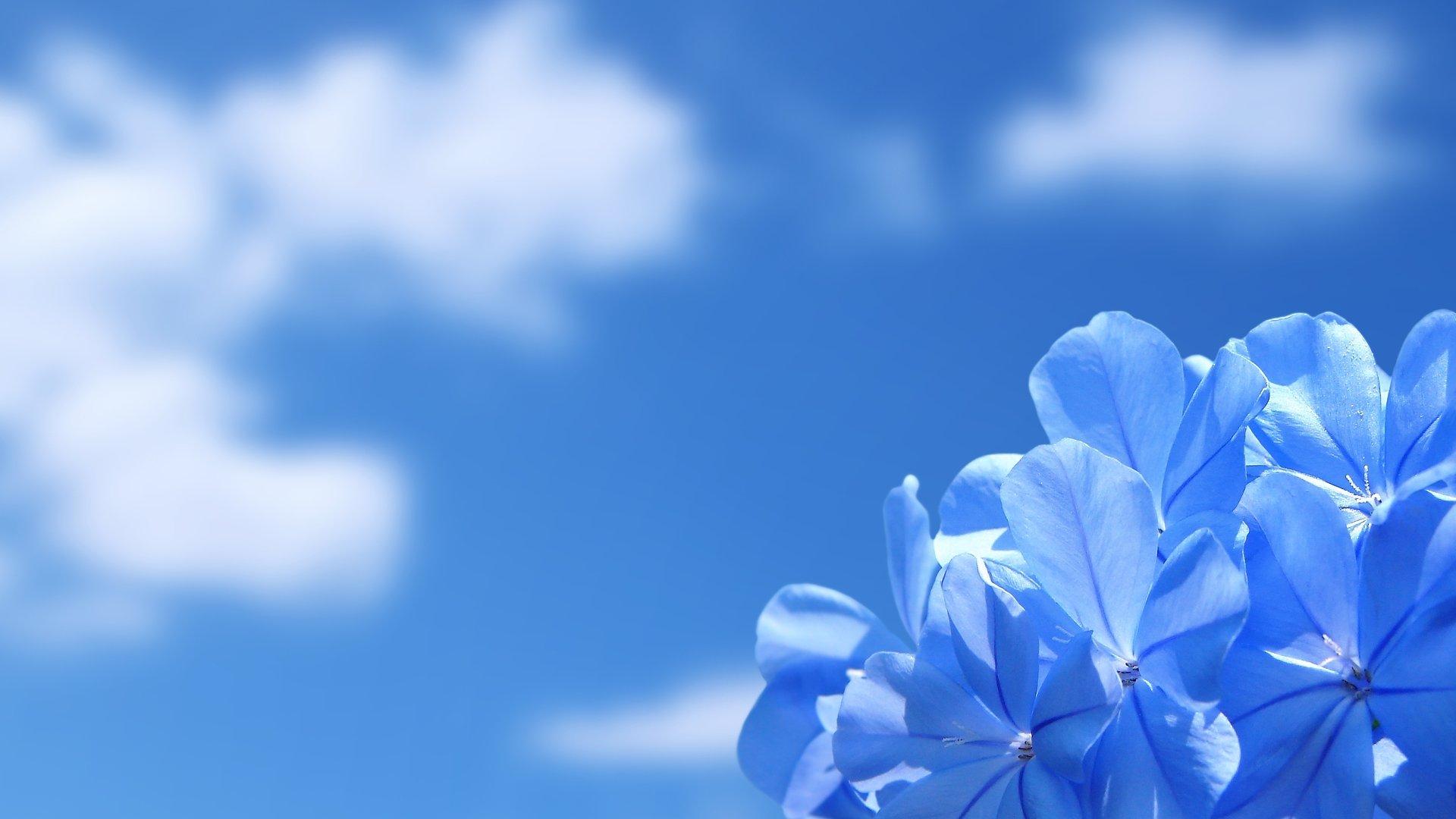 Desktop Wallpaper Of Flowers Full Size 1920x1080