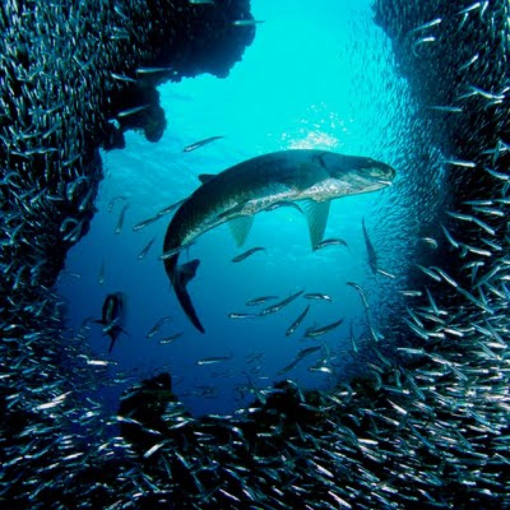 Free Under The Ocean Wallpaper