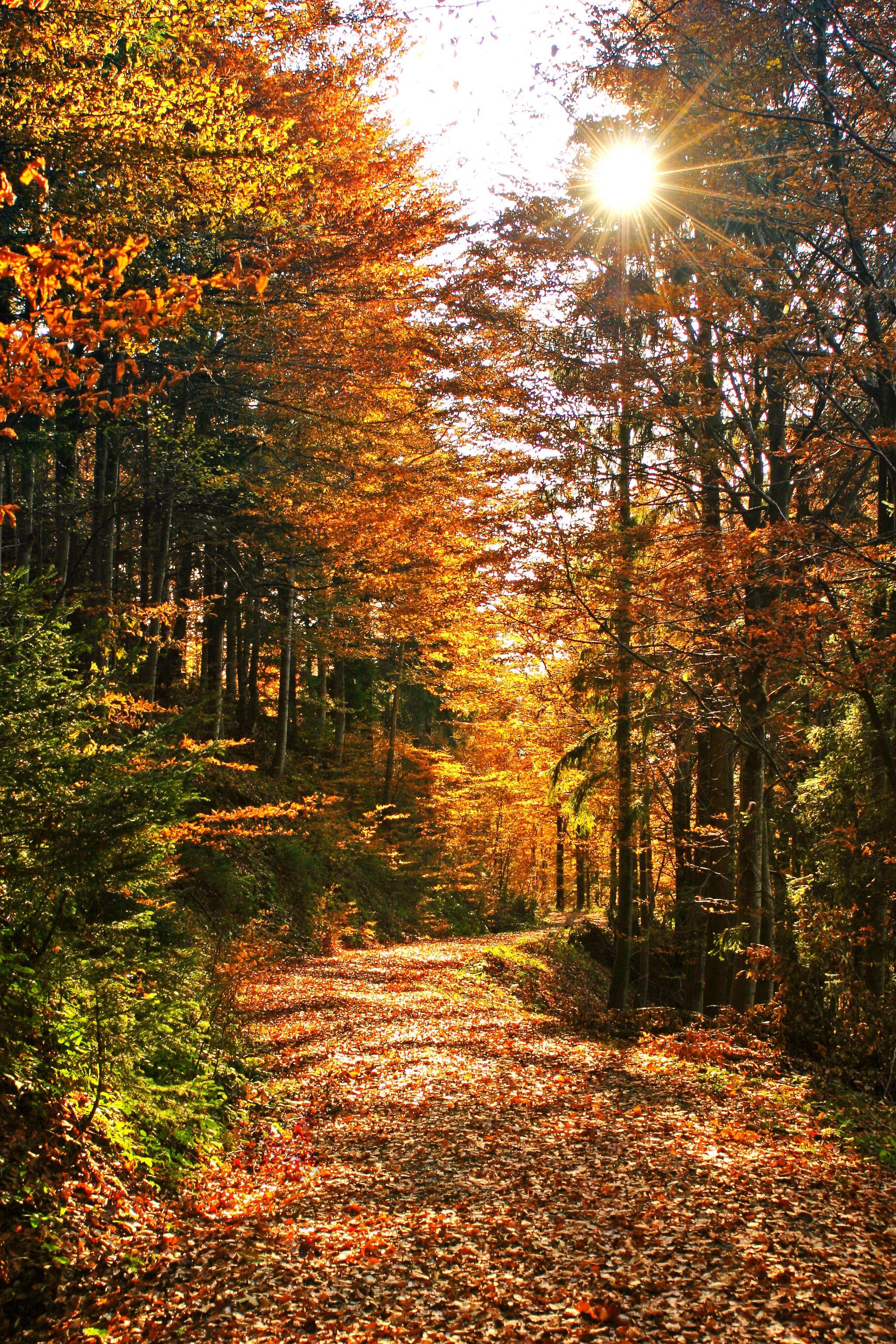 Fall mountain desktop wallpaper wallpapersafari - Nature wallpaper vertical ...