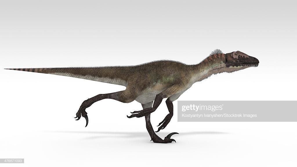 Utahraptor Dinosaur White Background stock illustration   Getty Images 1024x576