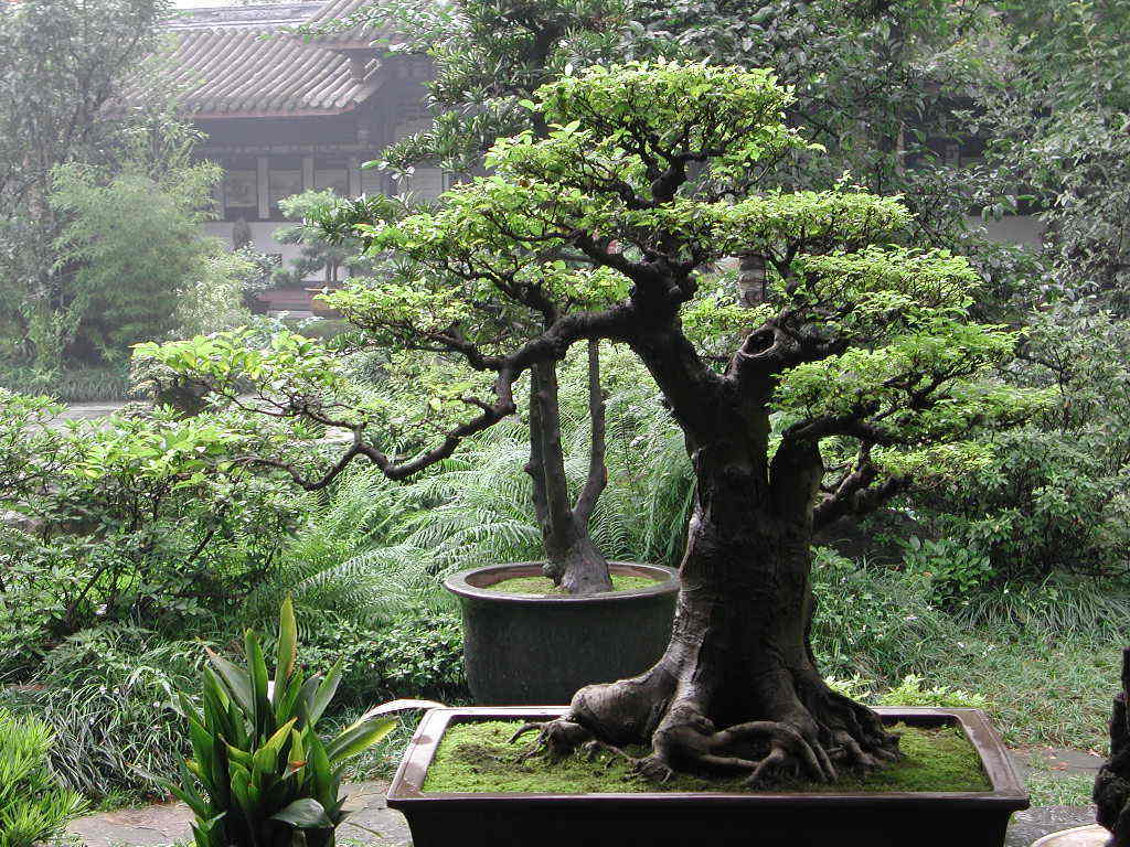 Bonsai Tree Art Wallpaper