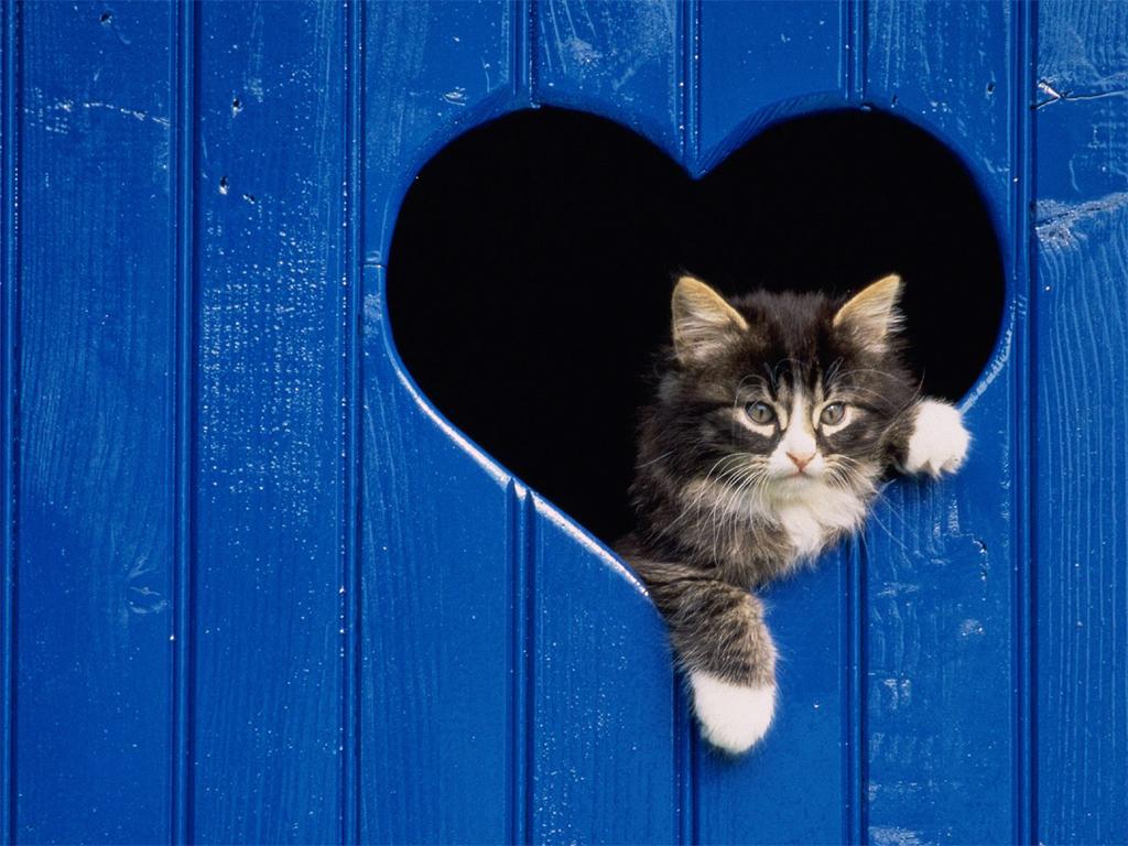 cute cat wallpaper cat wallpaper baby cat wallpaper 1024x768