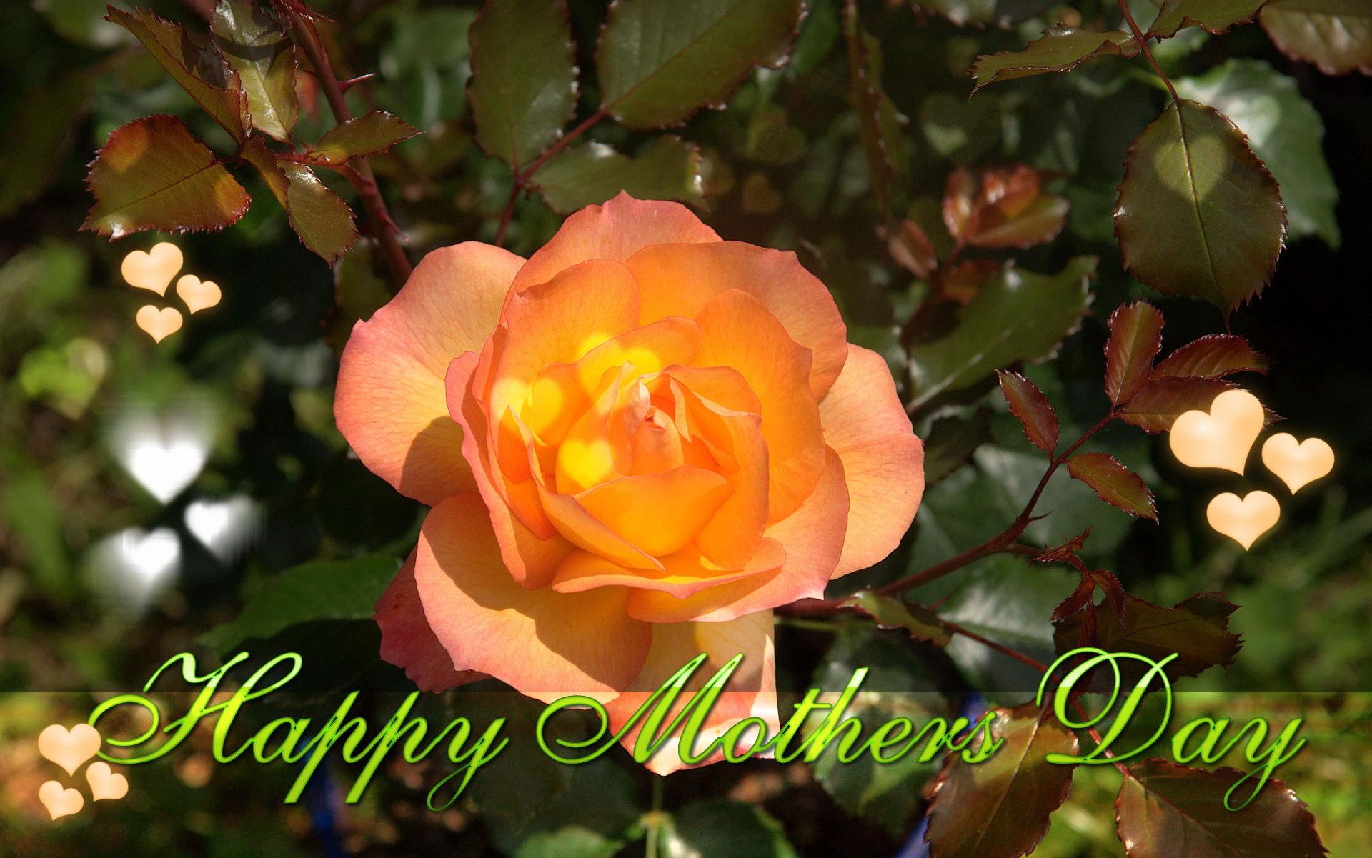 happy mothers day wallpaper 26jpg 1920x1201