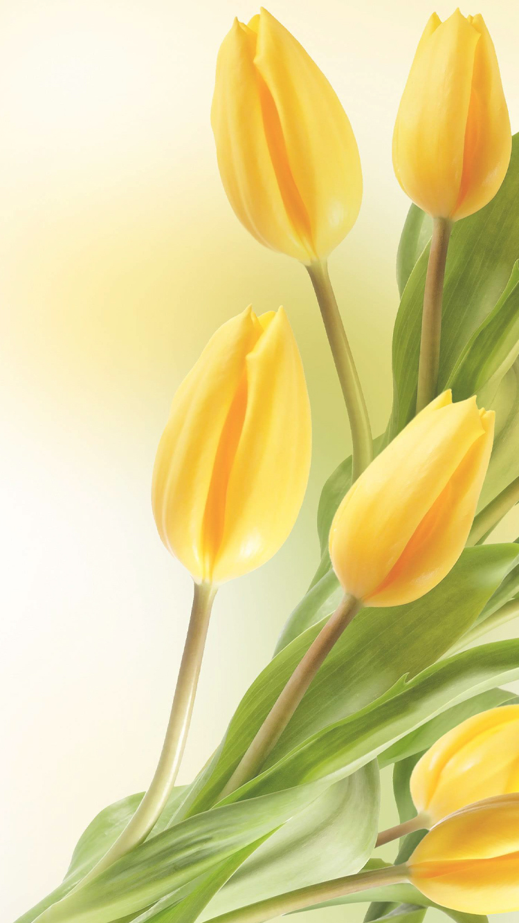 iPhone 6 Flower Wallpaper in HD with Yellow Tulip HD Wallpapers for 750x1334