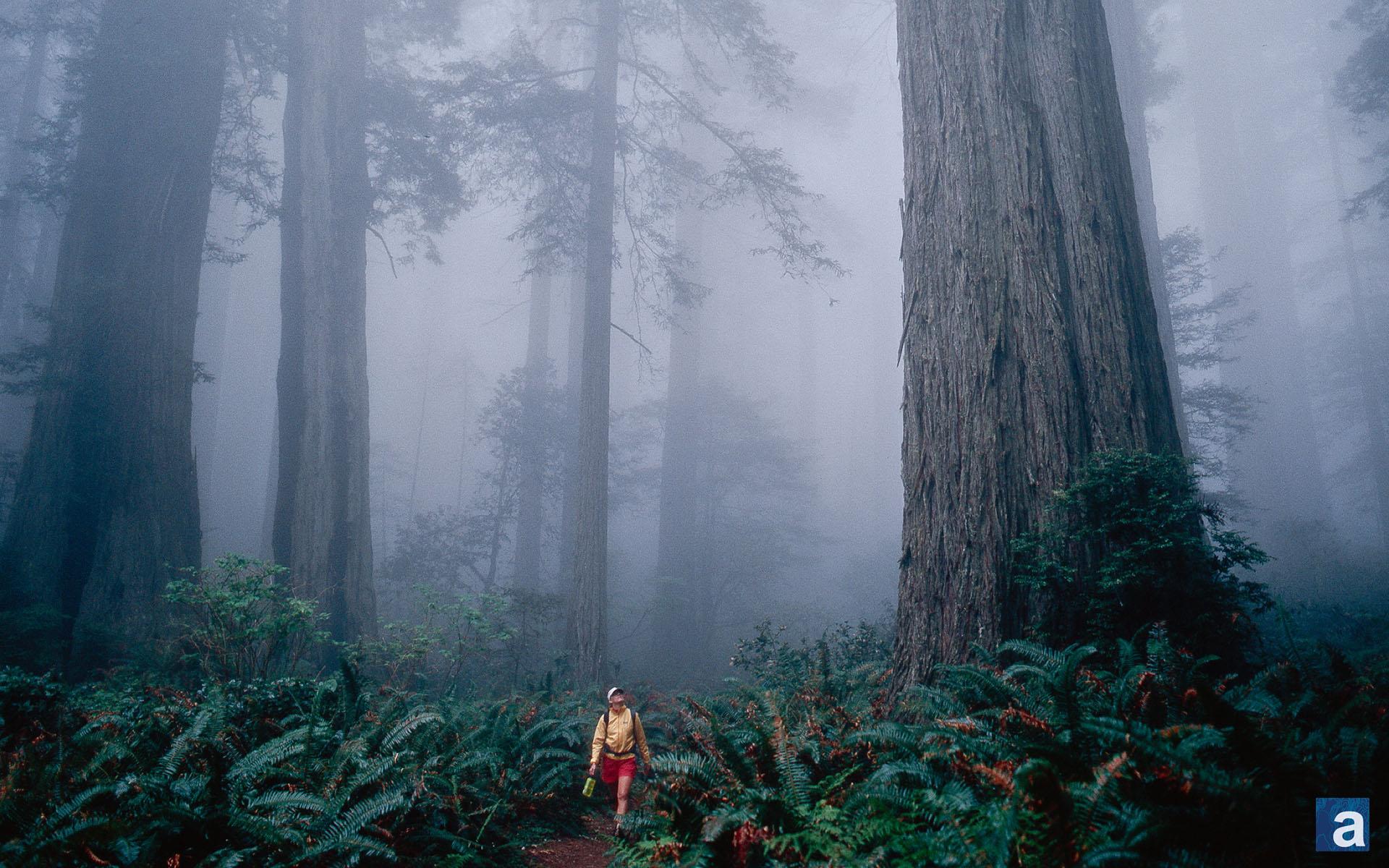 Redwoods Wallpaper Wallpapersafari