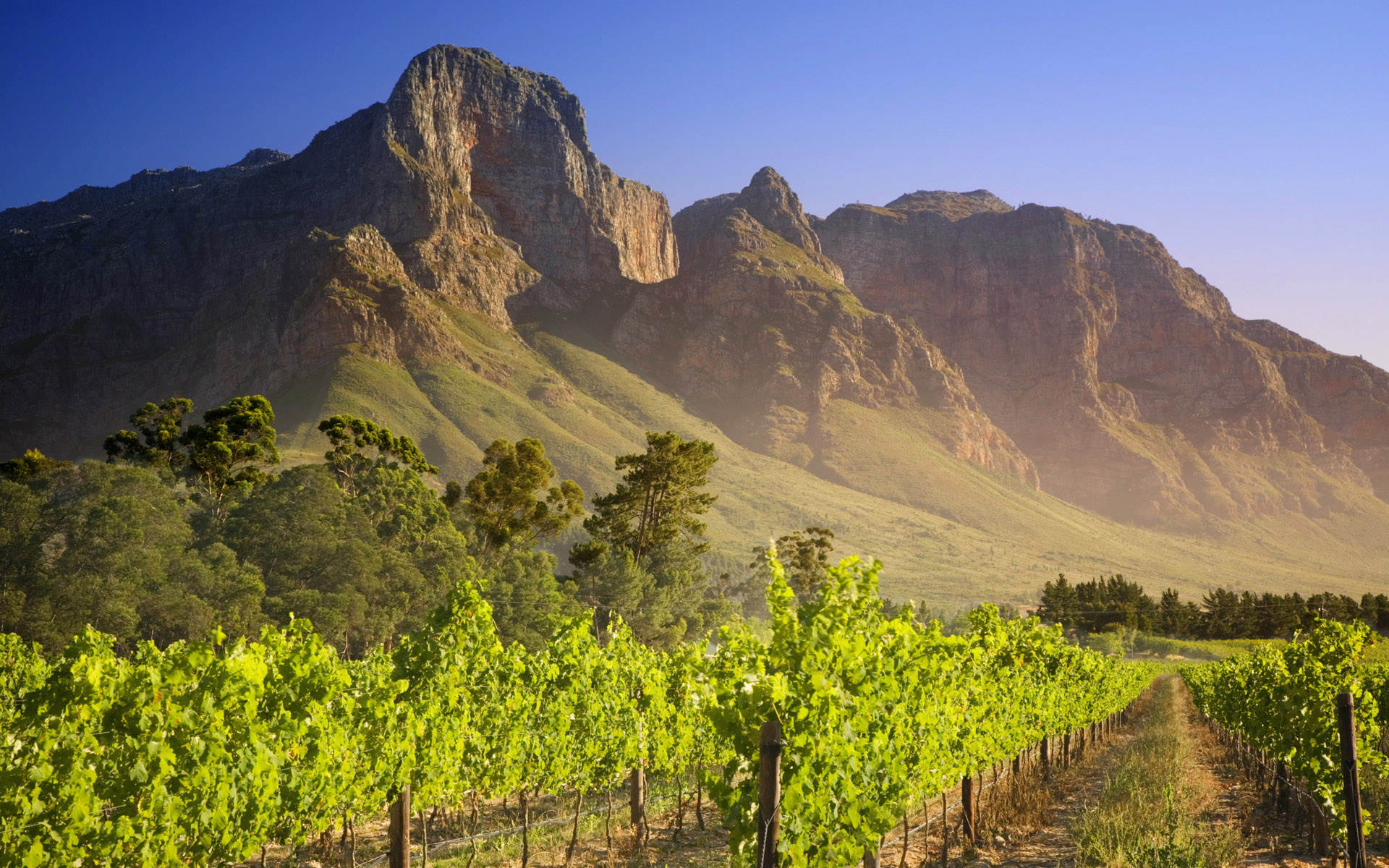 Vineyard in Franschhoek South Africa   Wallpaper 434 1920x1200