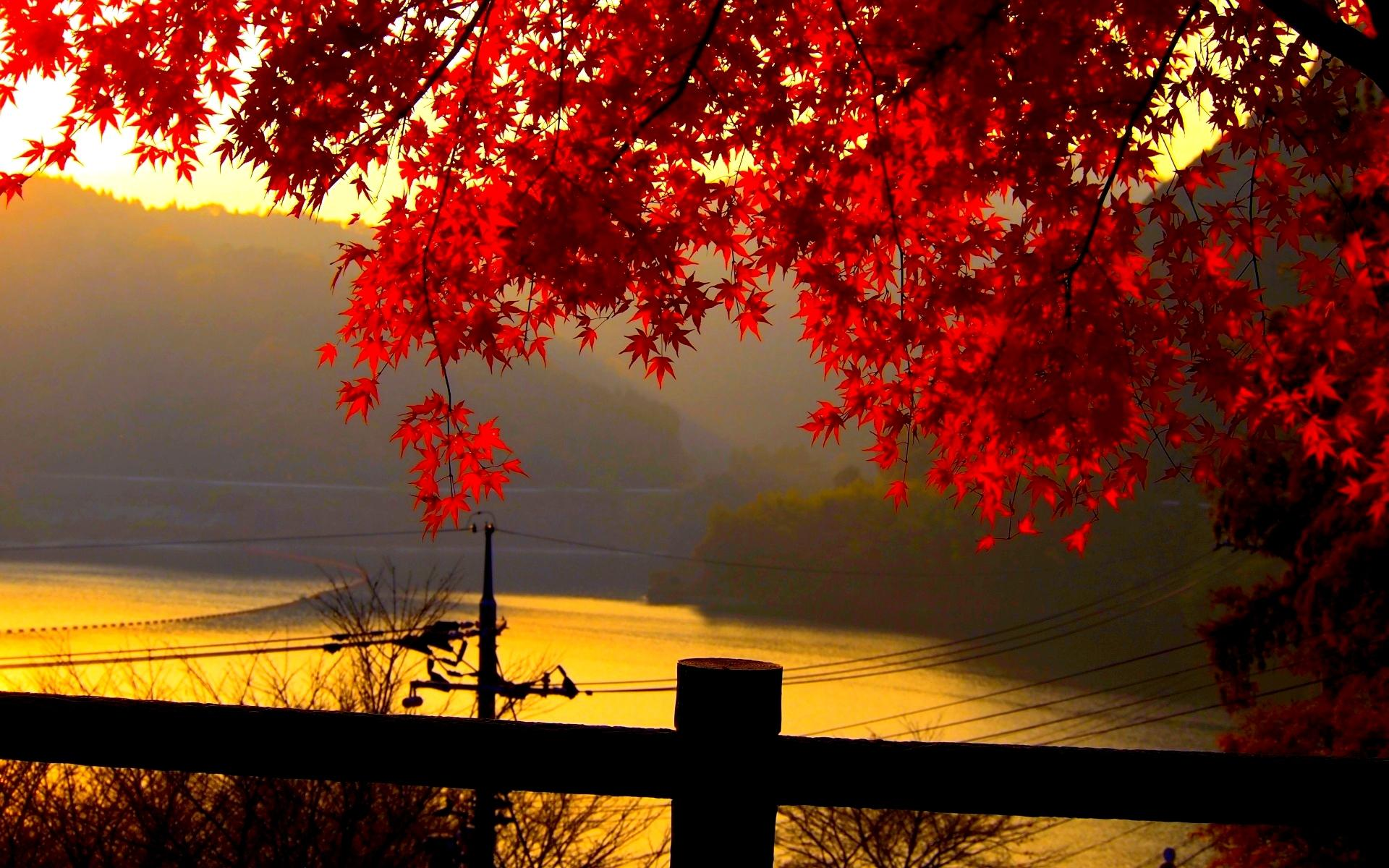 Autumn Leaves Wallpaper   Wallpapers 1920x1200