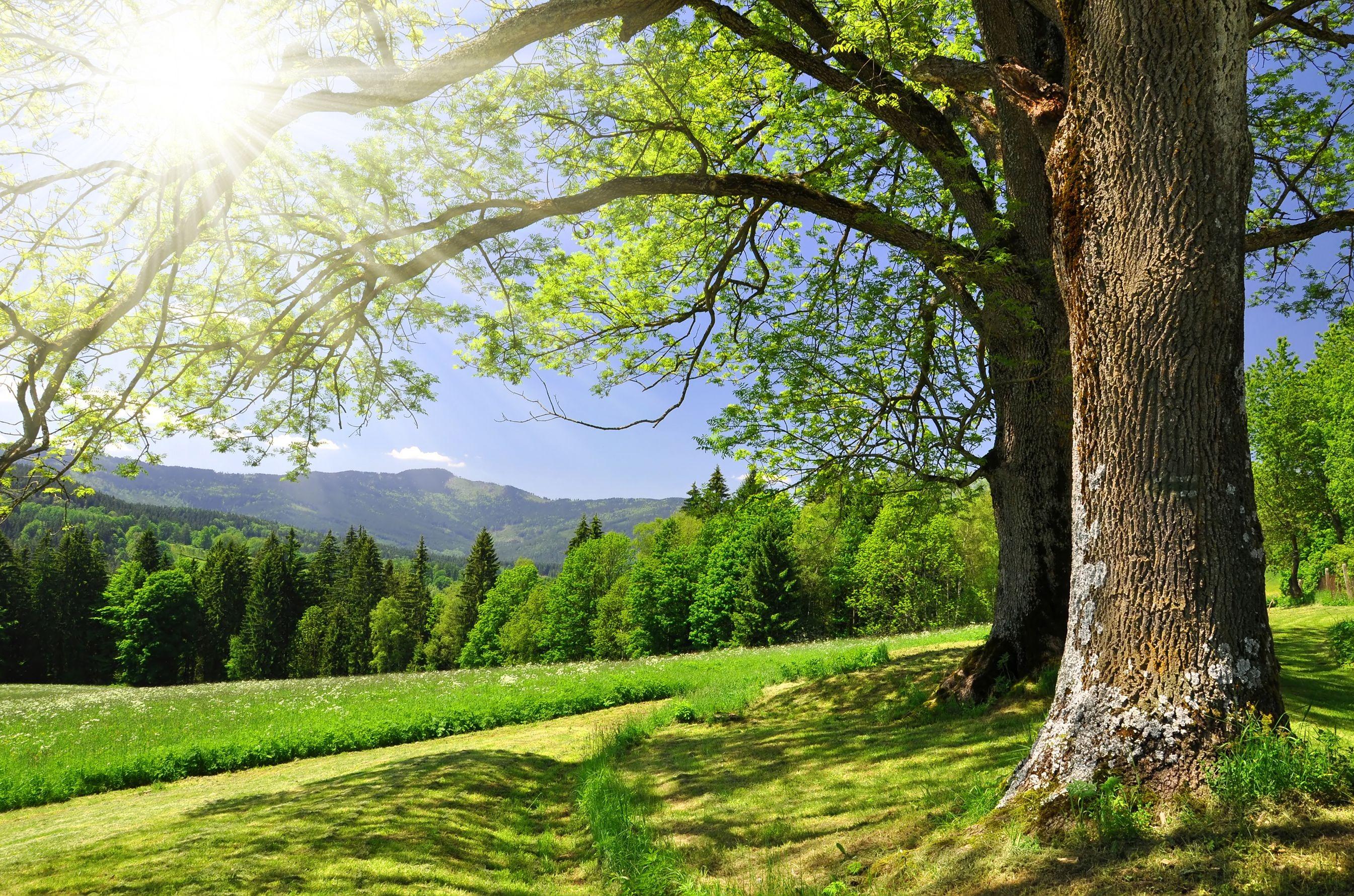зелень лес деревья  № 1078680  скачать