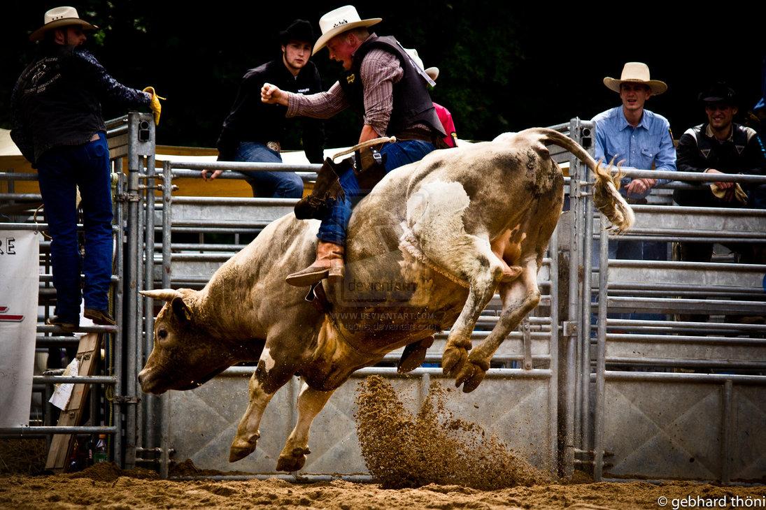 Bull Riding Wallpaper