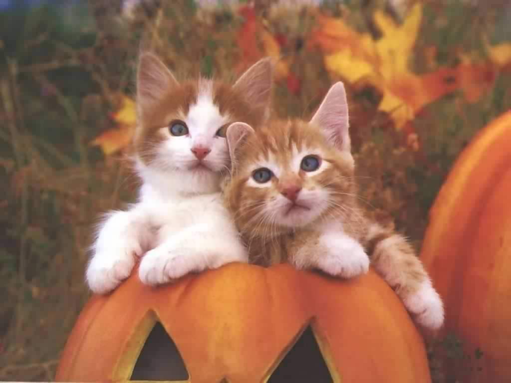 Cute Cat Halloween Wallpaper