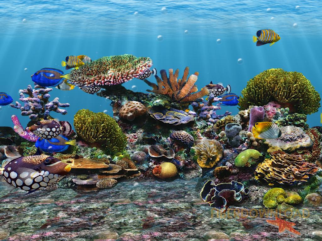 Free Fishing Screensavers and Wallpaper  WallpaperSafari