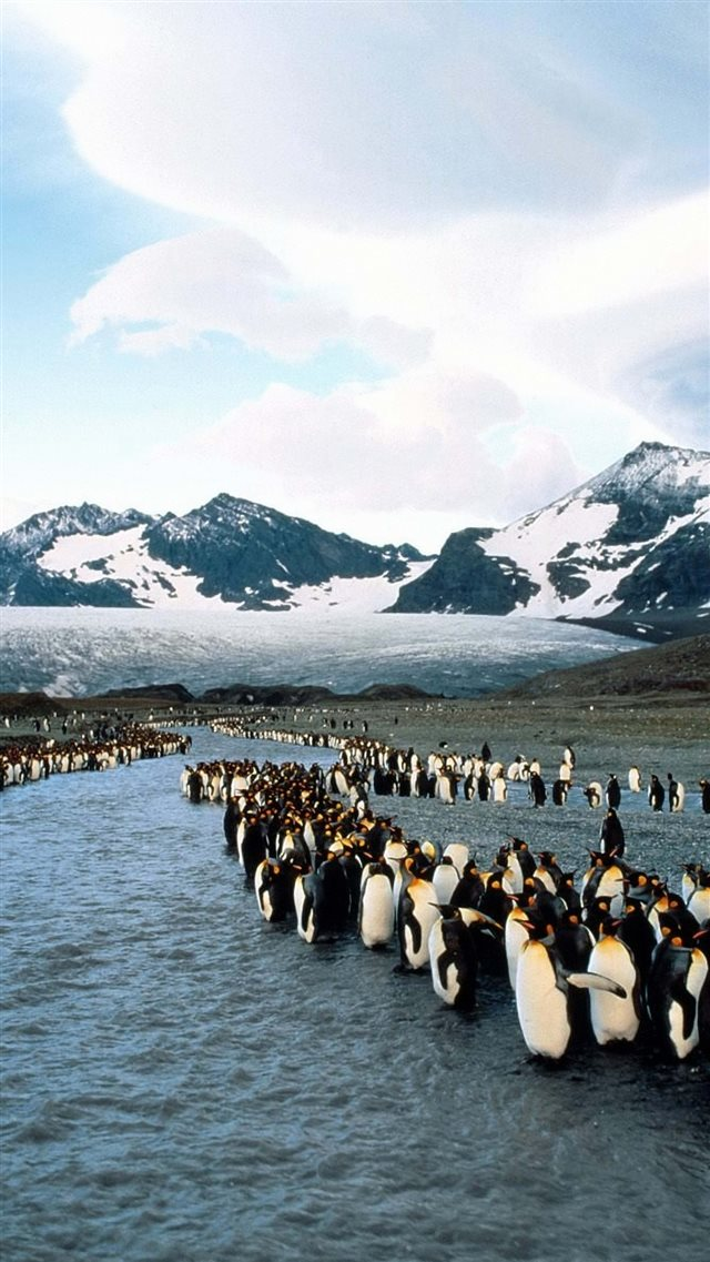 Penguins North Mountains Flock Colony iPhone 8 Download 640x1137