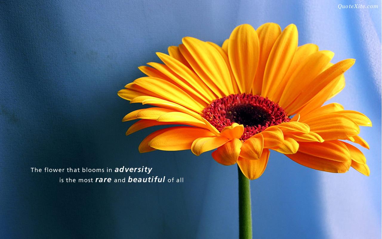 Beautiful Quotes Desktop Background 1280x800