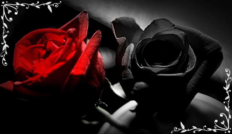 Red and black rose wallpapers wallpapersafari - Black and red rose wallpaper ...
