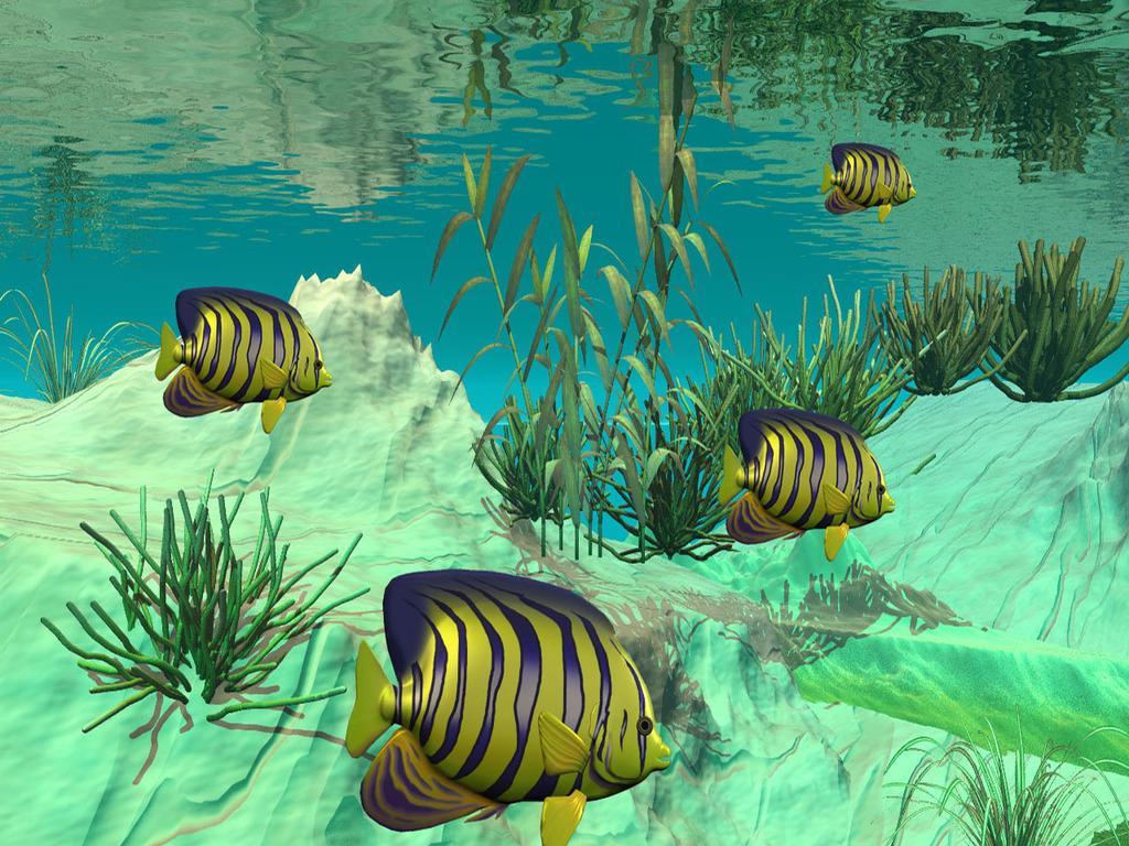 3D Live Fish Wa screenshot thumbnail 0 1024x768