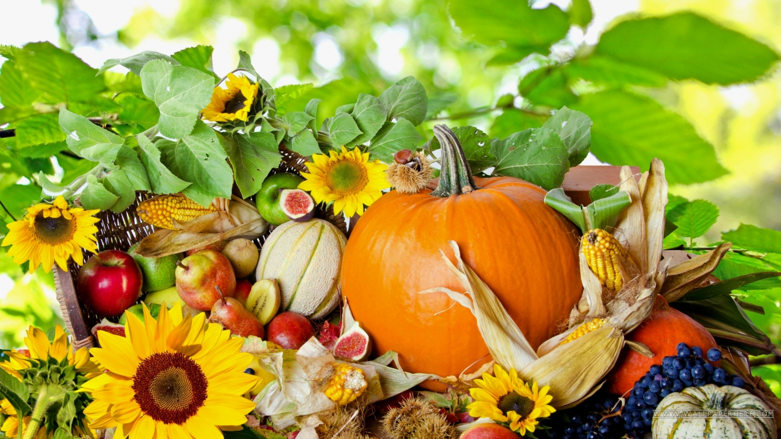 Thanksgiving wallpapers for desktop 1600x900 wallpapersafari - Wallpaper desktop thanksgiving ...