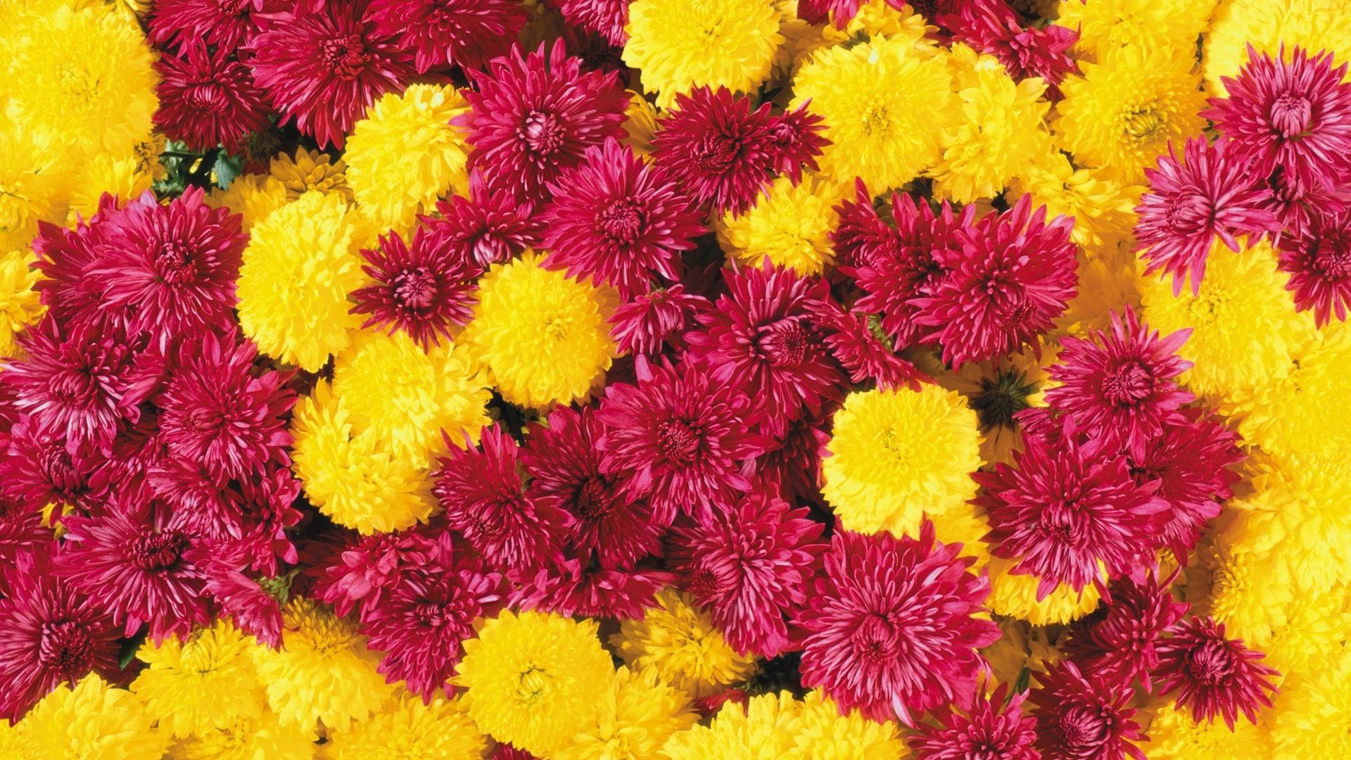 25 HD Flowers Wallpapers 1920x1080
