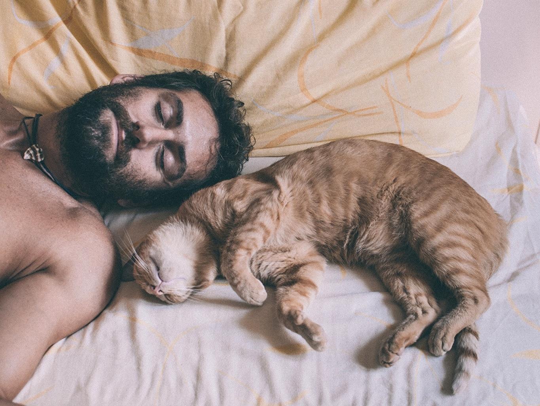 Images cat Men beards Sleep Animals 1365x1024