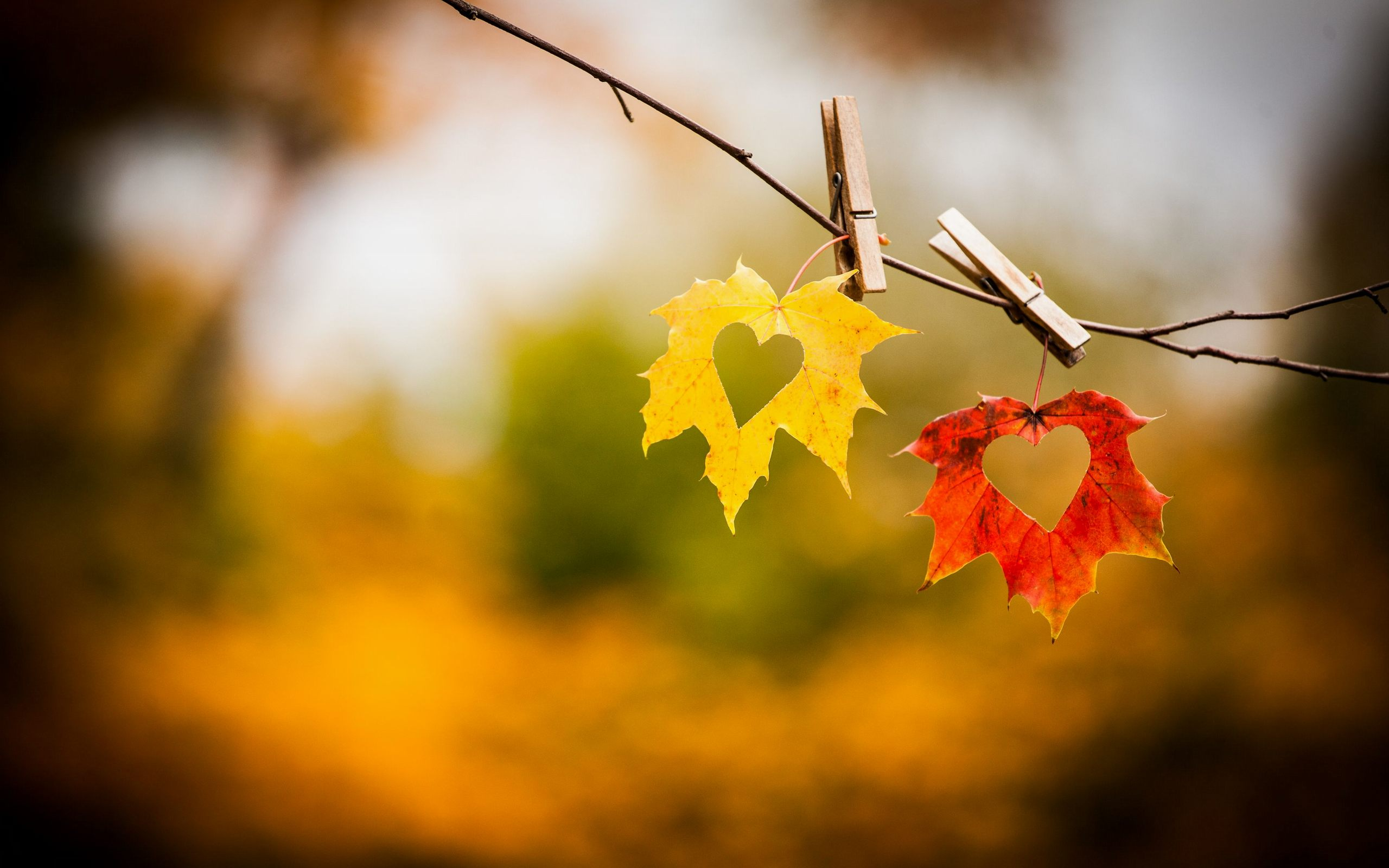Free Download Autumn Love Heart Wallpaper Hd Download Of Love Art 2560x1600 For Your Desktop Mobile Tablet Explore 78 Images Of Love Wallpaper Heart Love Wallpaper Images Best Love