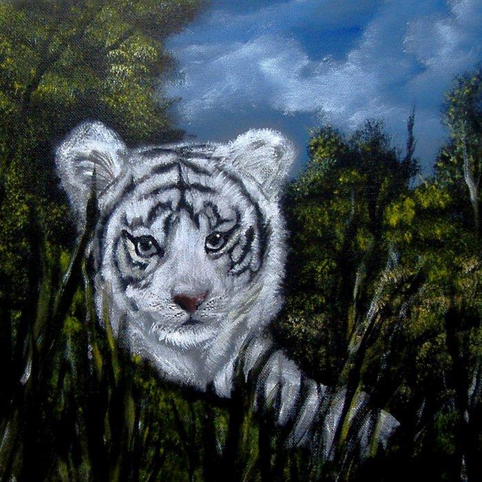 White Tiger Cubs Wallpapertiger tigers tiger picture bengal tiger 700x700