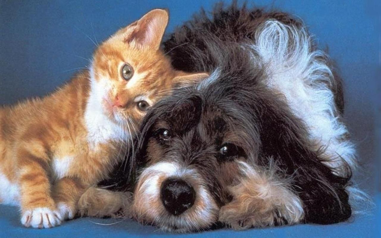 Dog and Cat Wallpaper   Teddybear64 Wallpaper 16834783 1280x800